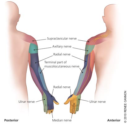 Carpal Tunnel Syndrome Nerve Diagram